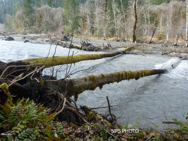 Bank erosion on the Elwha River