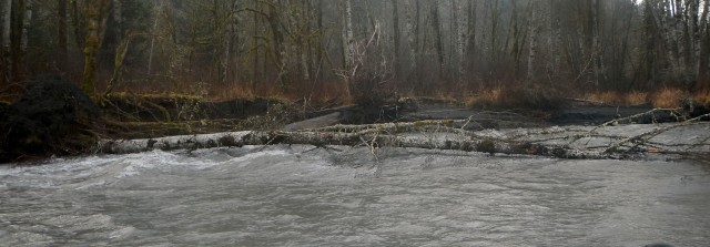 Elwha River Restoration Project Effects